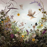 Finches and Butterflies