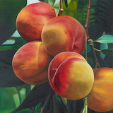 Peaches - Photorealism by Karin Kneffel