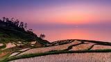 Koku Rice Fields, Japan