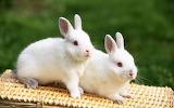 Cute-bunny-adorable-rabbits