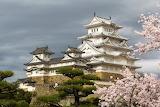 Himeji cherry blossom
