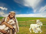 good-shepherd-field-sheep-christ-grass-religion