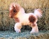 #Mini Teacup Baby Donkey