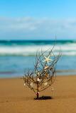 Beach christmas tree Photo by Anita Waters