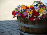 summer flowers in barrel