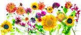 FloralMedleyPanorama_HaroldDavis