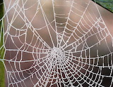 Frosted spiderweb