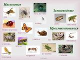 Putukad ja muud