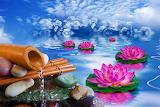 ☺♥ Lotus flowers...