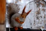 Le bonjour de l'écureuil
