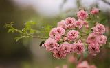 Flower garden plant (216)