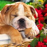 Sleeping the Day Away...