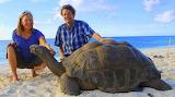 Tortoise ~ Seychelles