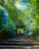 Garden, Japan