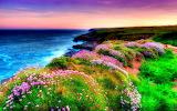 Bord de mer fleuri