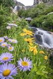 Wildflowers in Tahoe