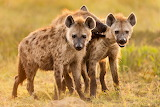 01-hyenas-nationalgeographic 1742911