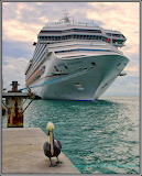 Carnival Conquest Ship & Pelican