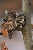 Howdy y' Owl