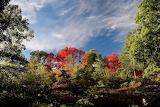 Trees-1663080 1280