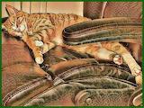 Teddy Sleeping in Dad's Chair