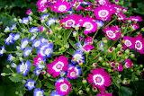 Flower b