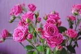 3.flower-hot-pink-flowers