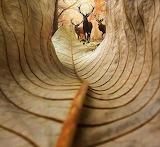 #An Elk's Perspective