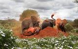 Dirt Bath ~ Kenya