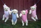 Dog clothes line