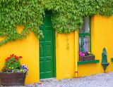 Yellow House with Ivy