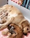 Nursing mums