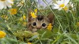 Gatito entre flores 2