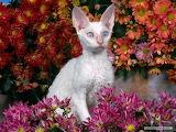 Cat in flower