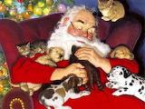 Dogs-and-Animals-Christmas-Santa-Claus-Wallpaper-HD