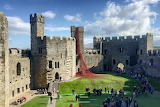 Weeping poppies at Caernarfon Castle - Wales