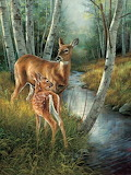 Birch Creek Deer