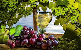 виноград 9