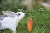 Rabbits-love-carrots-orig