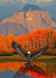 Eagles Lake