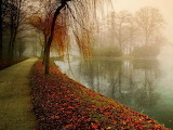 #Hazy Autumn Walk