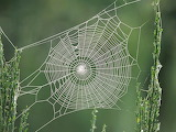 Pretty Spider Web