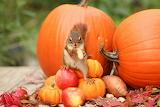 AutumnSquirrel