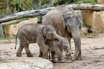 Thumb-asian-elephant-216668