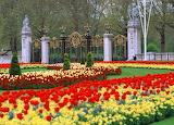 Flowers-scenery-garden