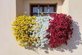 Happy Summer Flowers