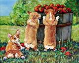 pembroke-welsh-corgi-puppies-lyn-cook
