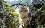 Animals cat tree