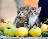 Kittens and apples