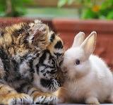 Тигренок и кролик